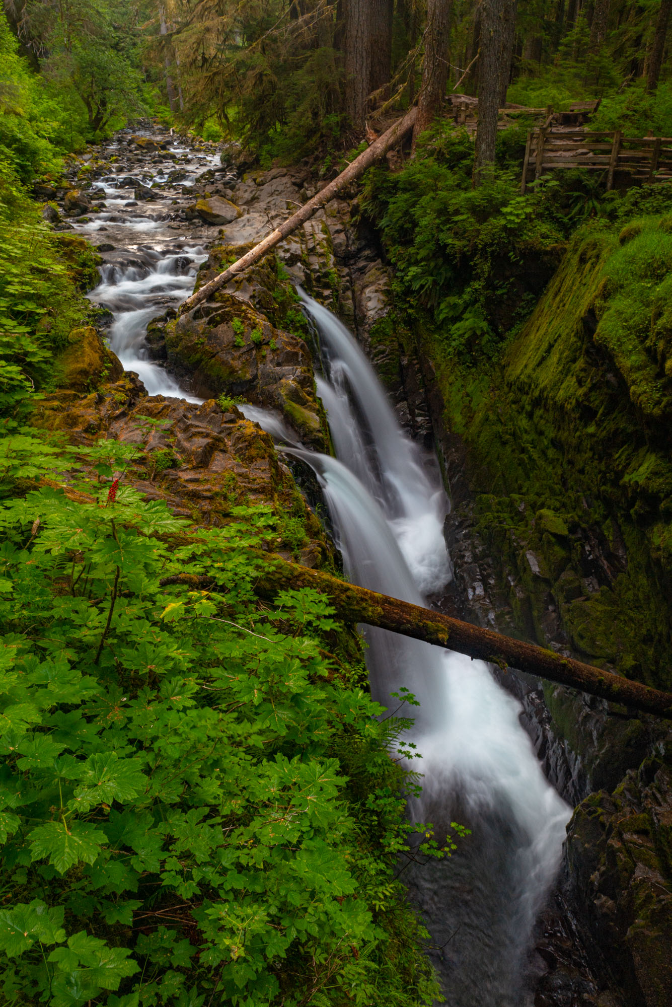 A Fine Art photograph of Sol Duc Falls flowing from by beautiful green forest of Olympic National Park in Washington produced...