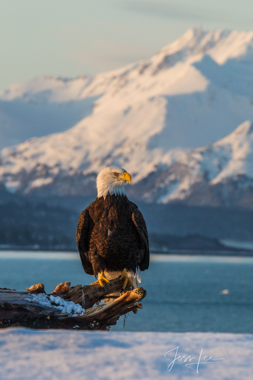 Bring home the power and beauty of the amazing fine art American Bald Eagle photograph Eagle Mountain by Jess Lee from his Wildlife...