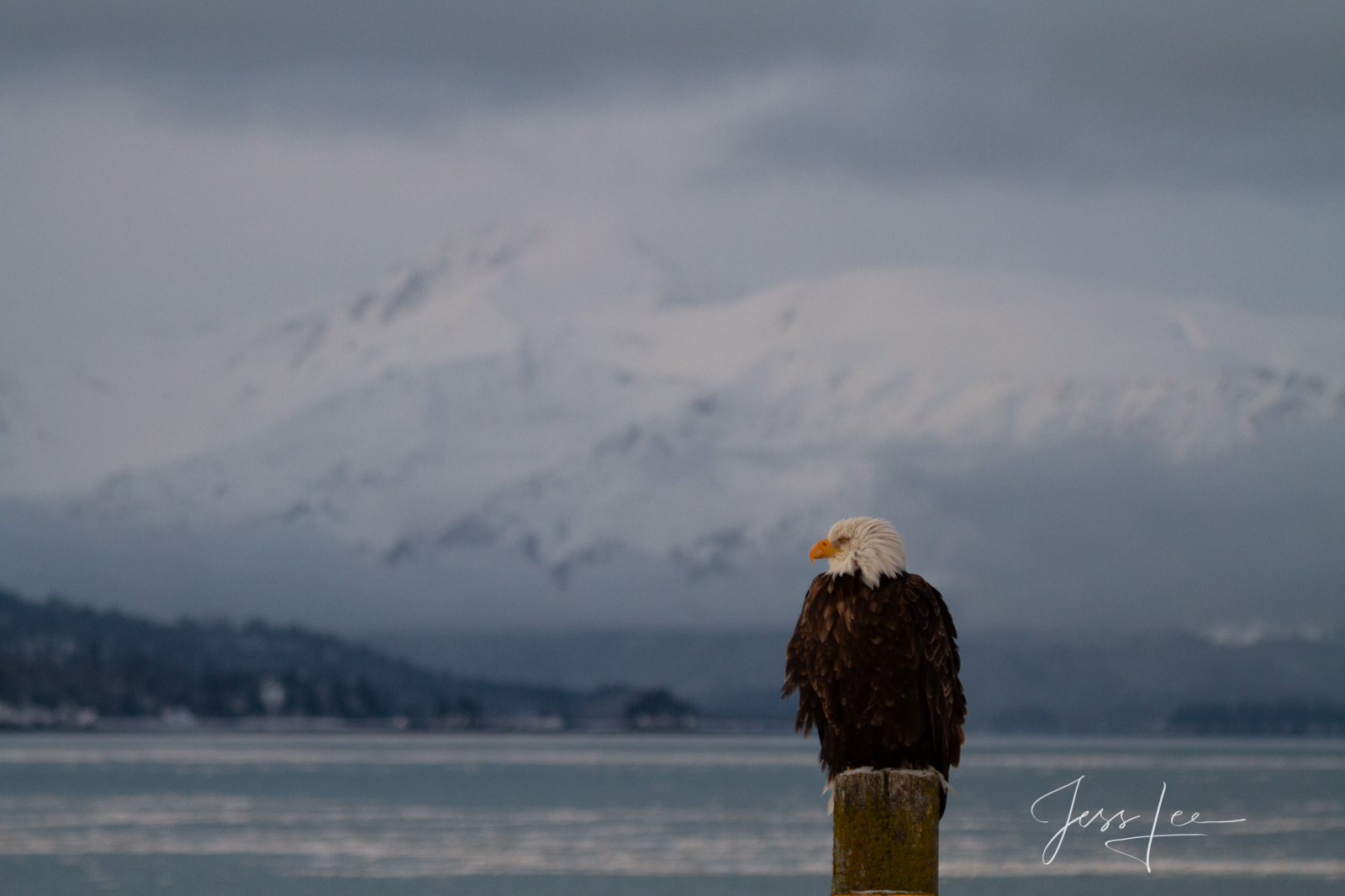 Bring home the power and beauty of the amazing fine art American Bald Eagle photograph Waiting Game by Jess Lee from his Wildlife...