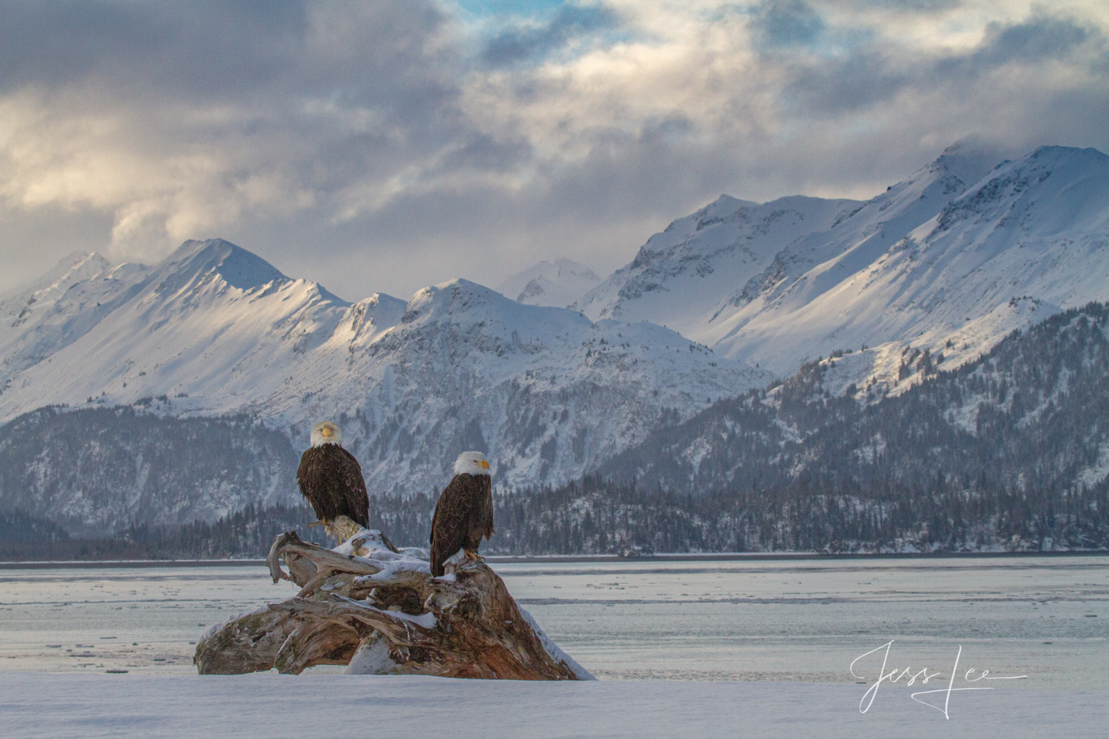 Bring home the power and beauty of the amazing fine art American Bald Eagle photograph The Beyond by Jess Lee from his Wildlife...