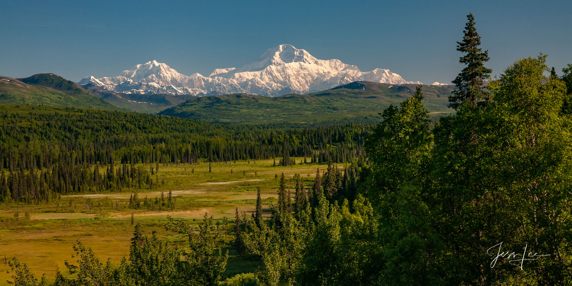 Snow covered mountains and lush evergreens in Denali National Park, Alaska