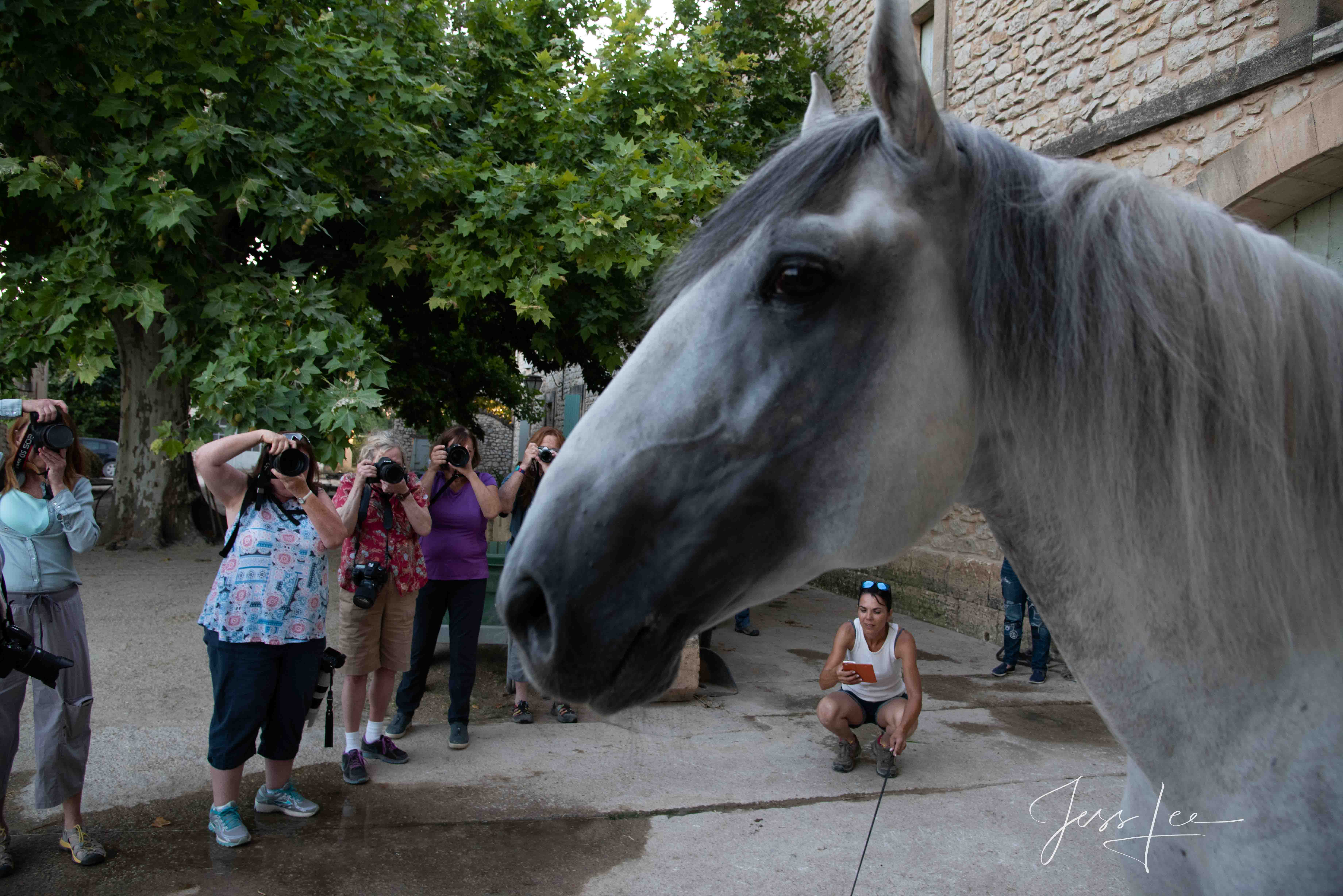 Fine Art, Limited Edition, Luxurious photographic prints of the horses of the Camargue and Provence region of France. These Fine...