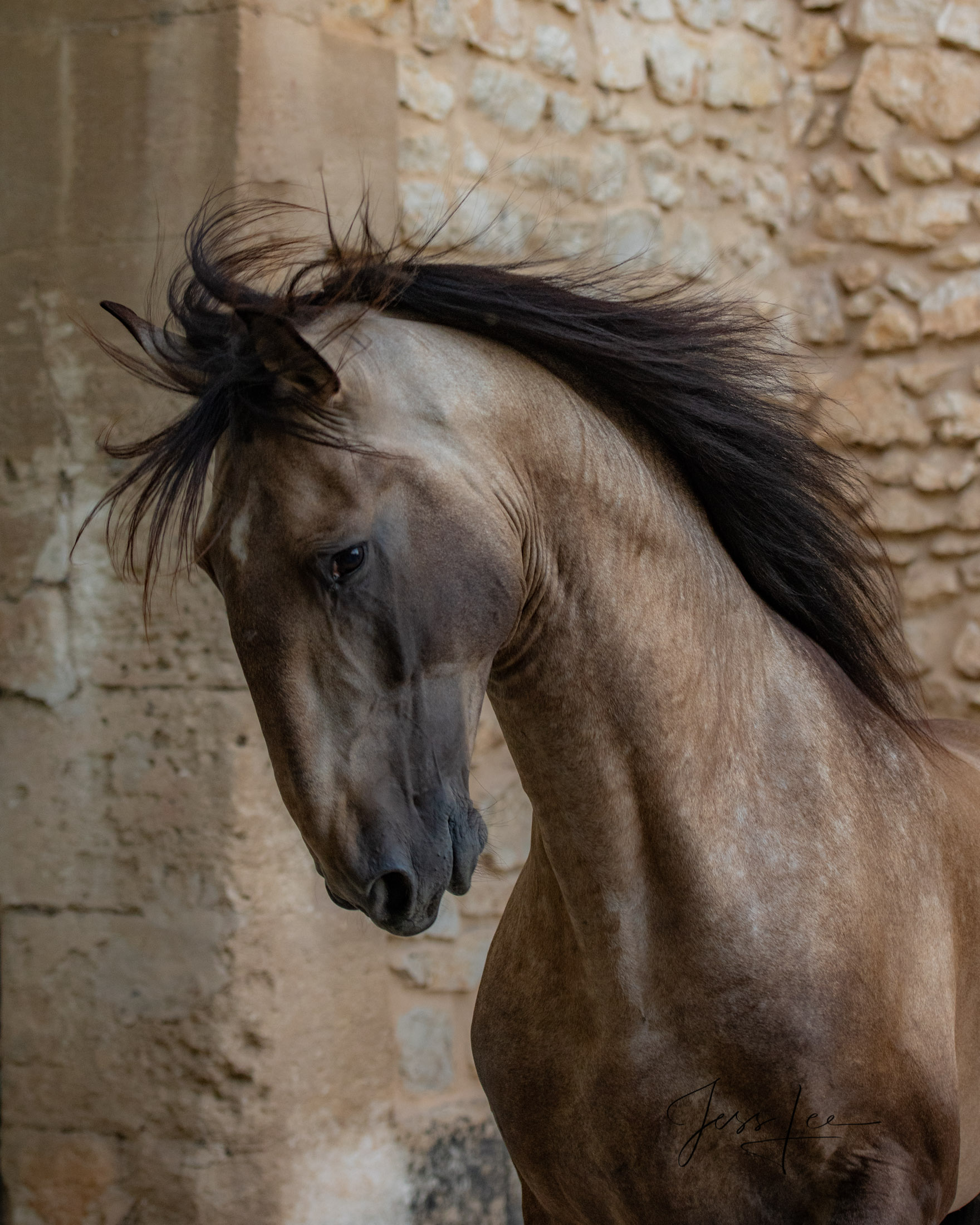 Camargue # 6 Fine Art, Limited Edition, Luxurious photographic prints of the horses of the Camargue and Provence region of France...