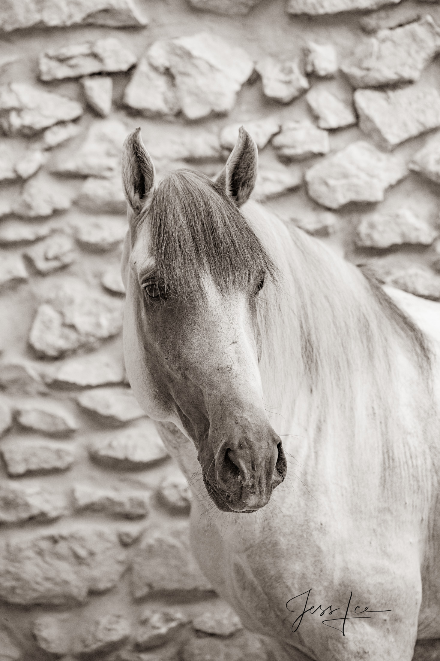 Camargue # 9 Fine Art, Limited Edition, Luxurious photographic prints of the horses of the Camargue and Provence region of France...