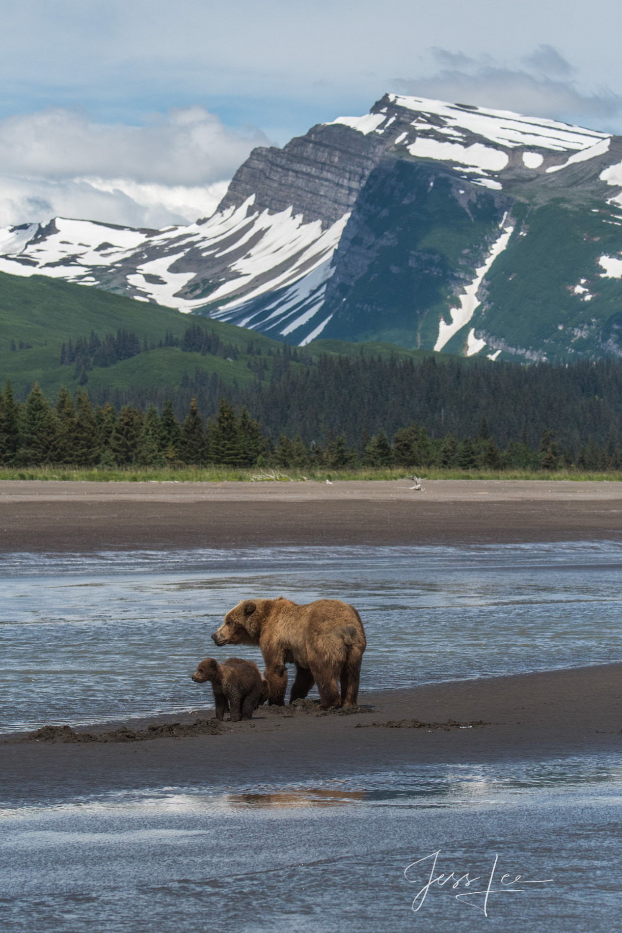grizzly, beare, bears, brown bear, cubs, wildlife photographer famous, best,, photo