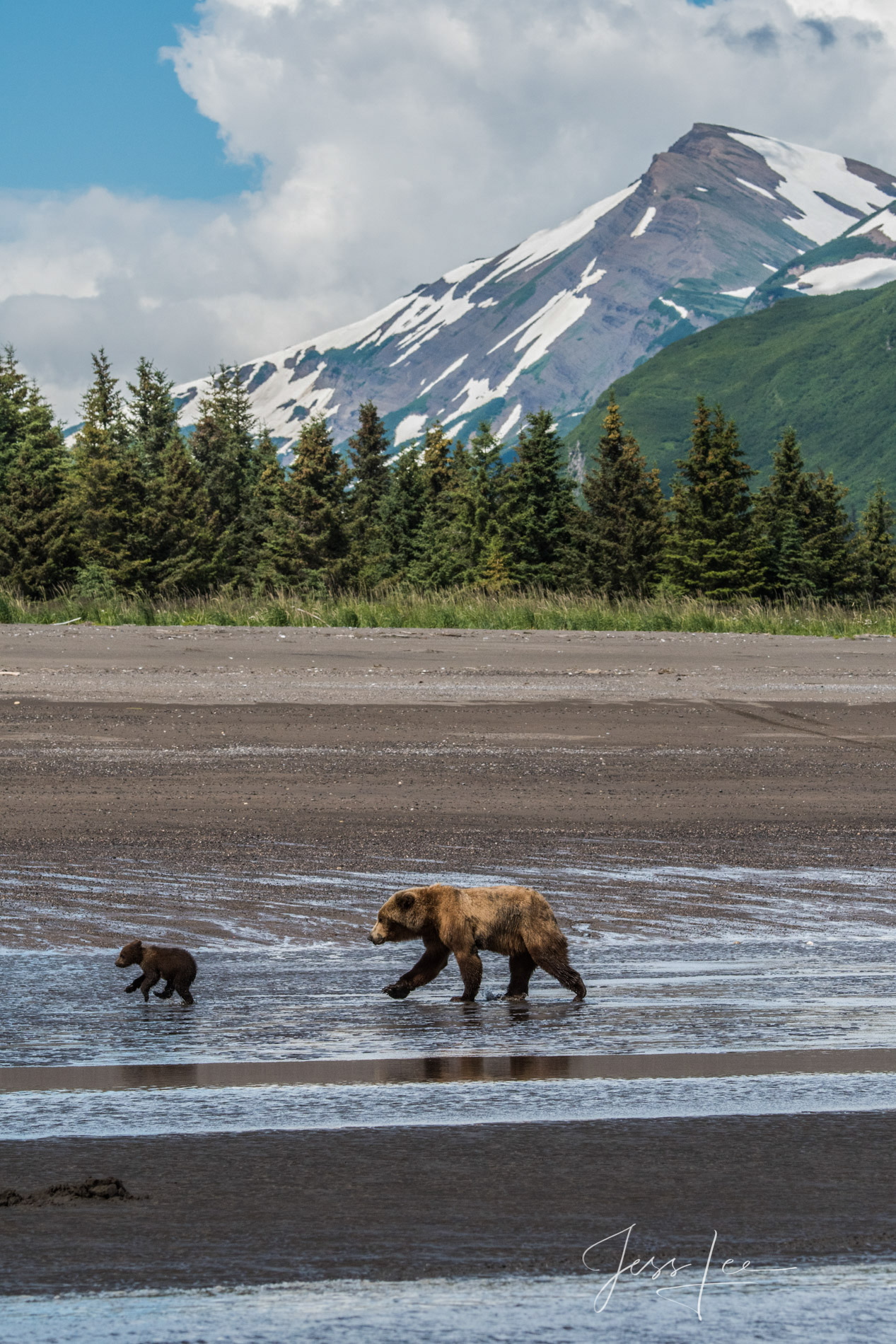 Grizzly Bears at Lake Clark