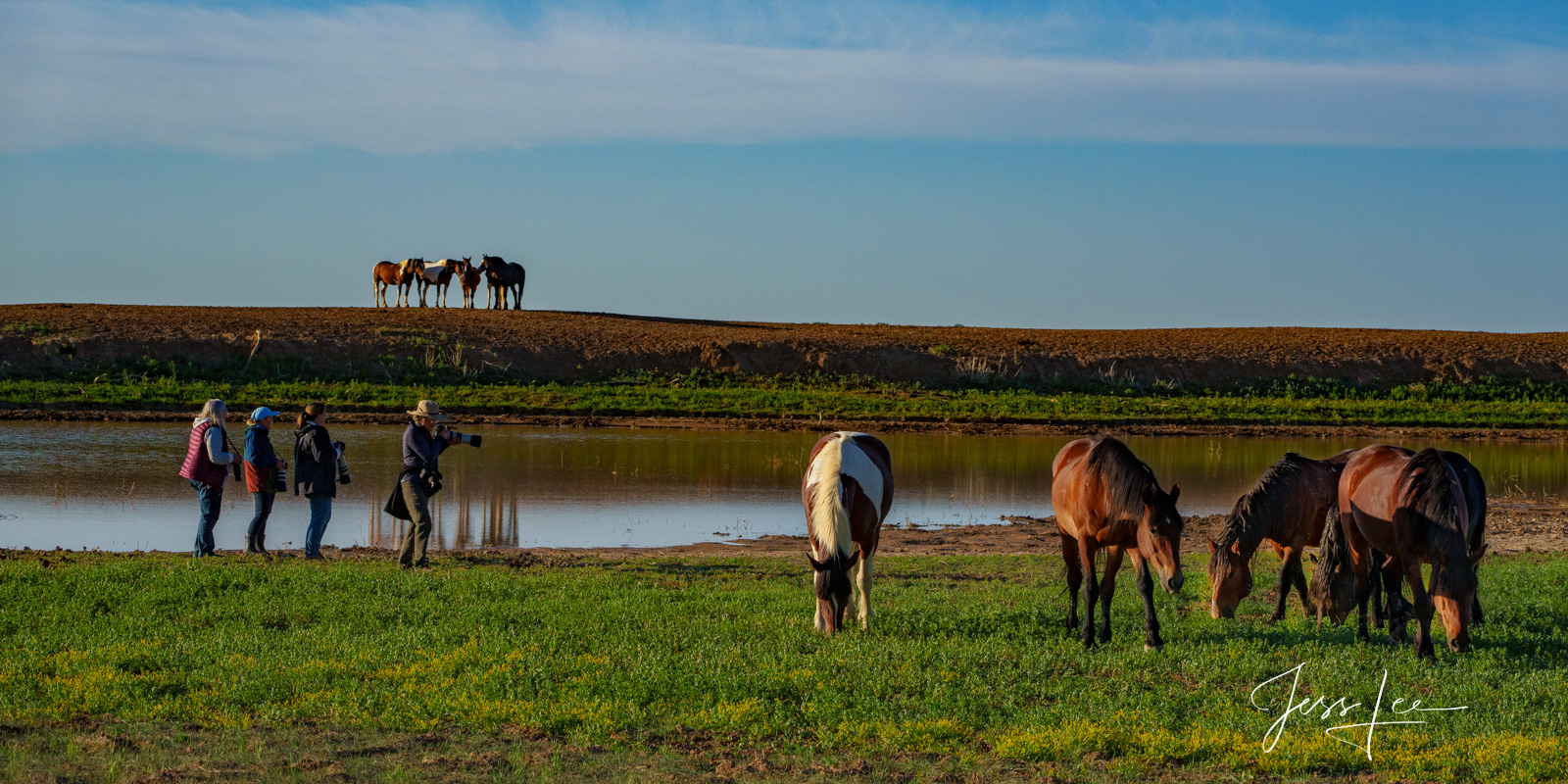 Fine Art Limited Edition Photography of Wild Herd of Mustang Horses. Wild Horses or Mustang photographers  This is part of the...