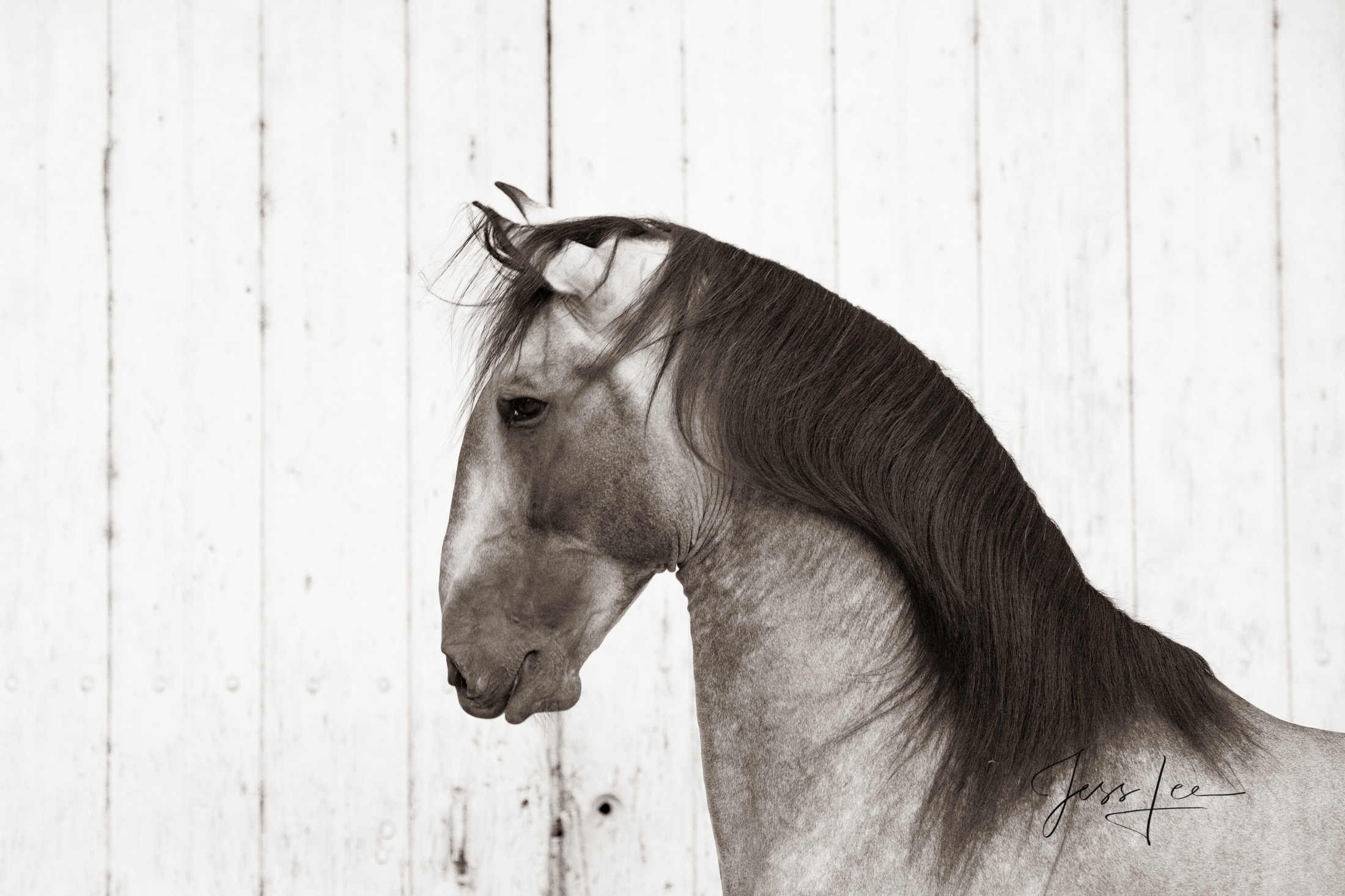 Camargue # 5 Fine Art, Limited Edition, Luxurious photographic prints of the horses of the Camargue and Provence region of France...