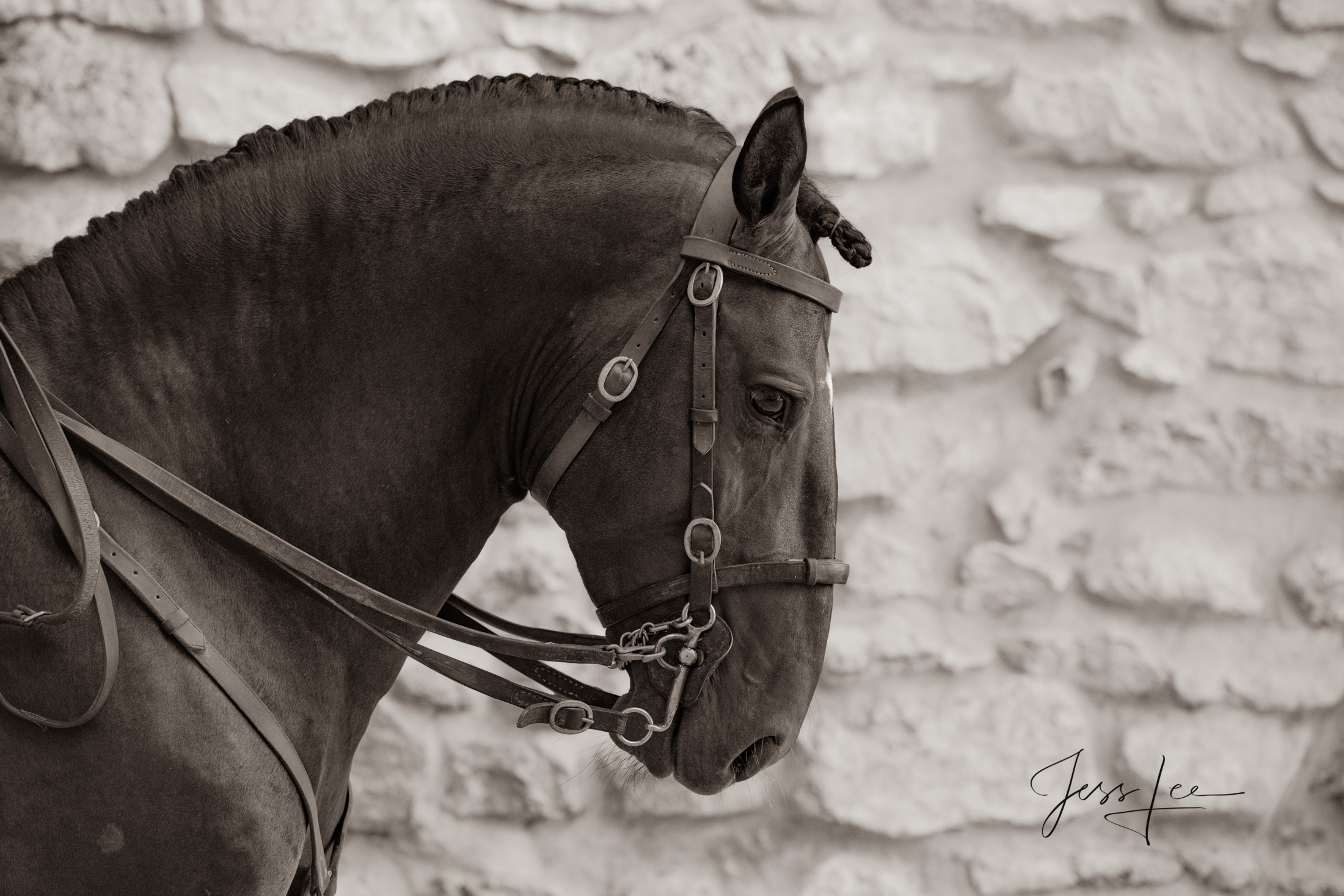 Camargue # 9-1 Fine Art, Limited Edition, Luxurious photographic prints of the horses of the Camargue and Provence region of...