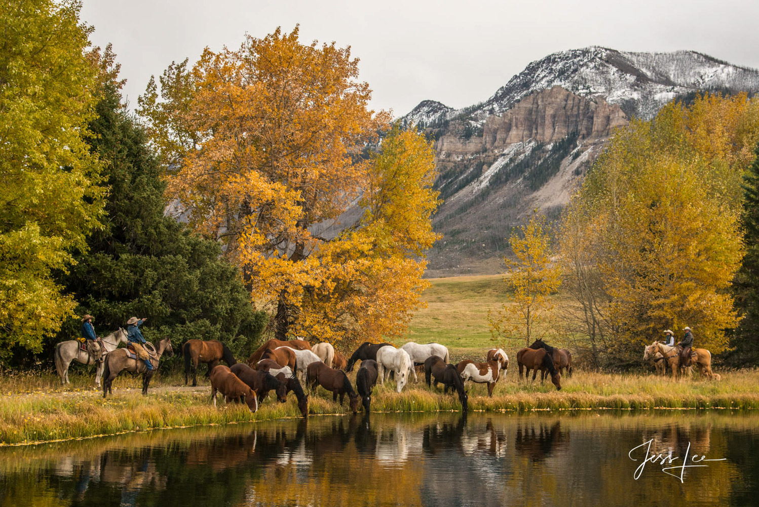 Fine Art Limited Edition Photography of Cowboys, Horses and life in the West. Wyoming horse herd drinking in a golden pond at...