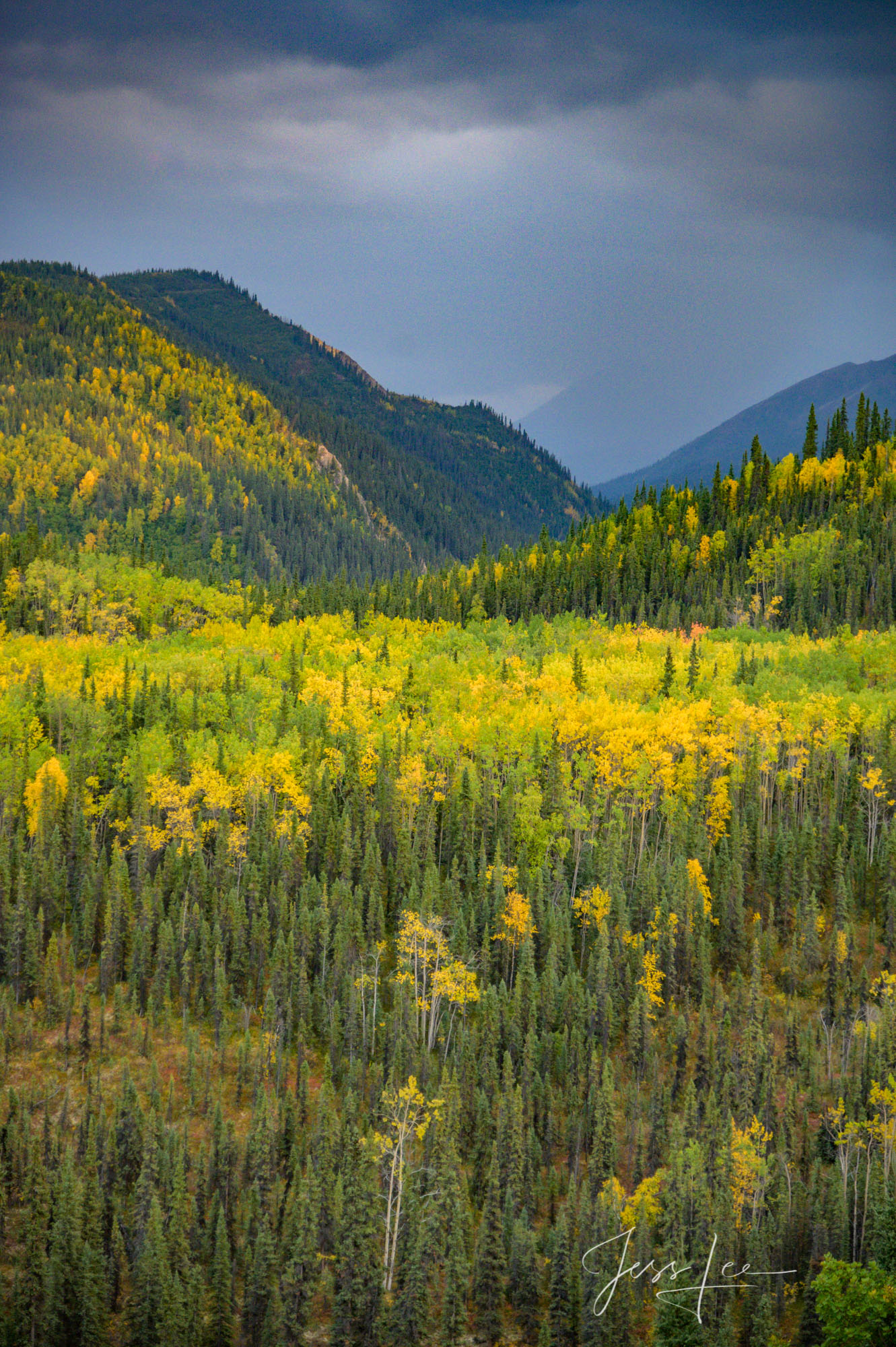 These Moose fine art landscape photographs are offered as high quality prints for sale as created by Jess Lee. My prints are...