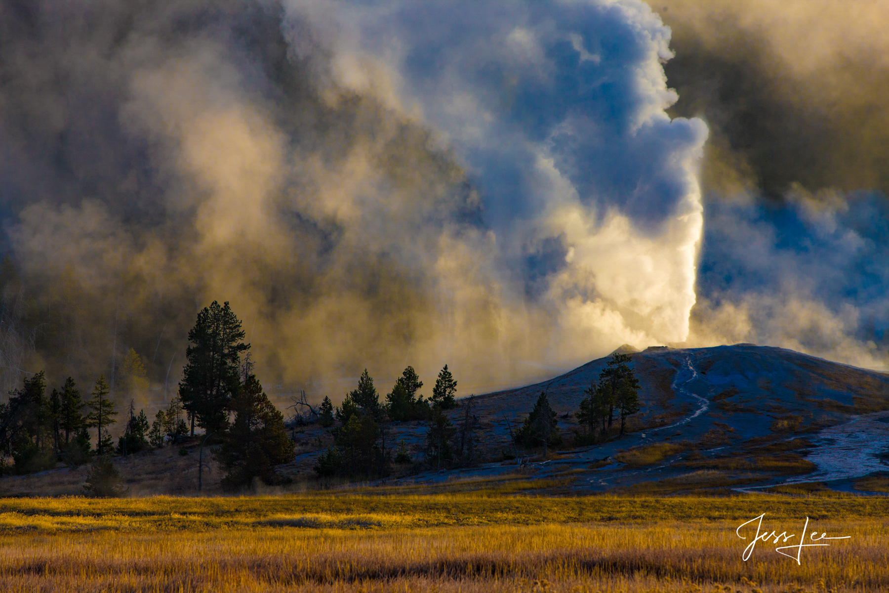 Yellowstone Half Day Photo Tour