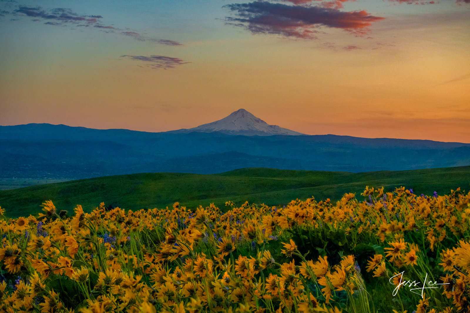 photo of Mount Hood, Washington photography, National Parks, Pacific Northwest, PNW, fine art prints, mountain, snow-covered, sunflower field, sunset, blue sky, landscape, field , photo