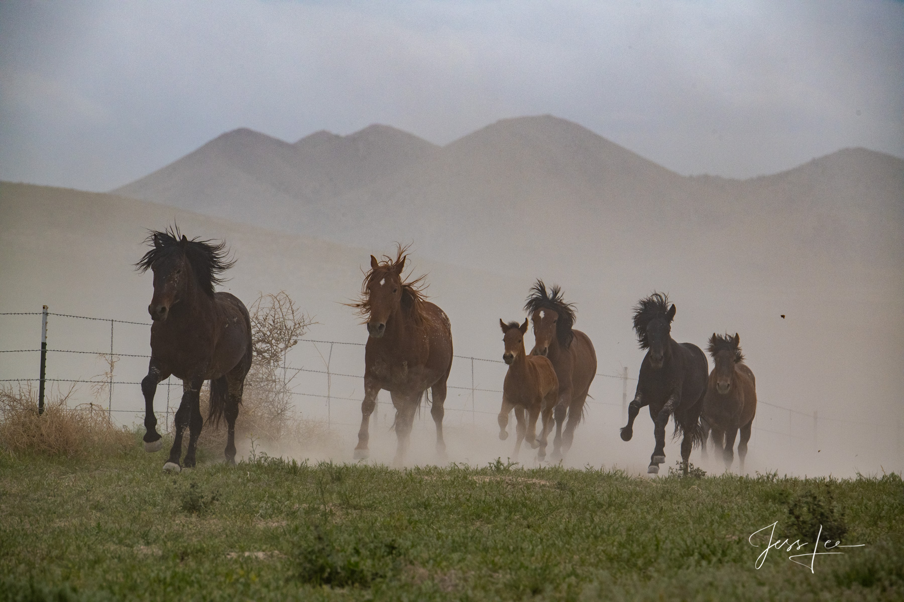 Fine Art Limited Edition Photography of Wild Horses. Wild Mustangs. This is part of the luxurious collection of fine art, limited...