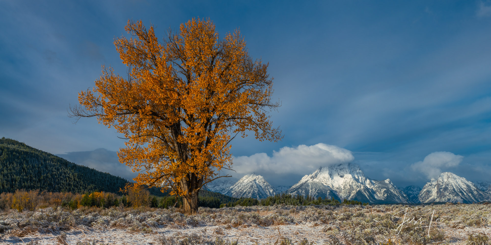 Photo, Teton, tree, autumn, color, cottonwood, Mt Moran, Panorama, mountain, Prints, fine art, luxury, limited edition,, photo