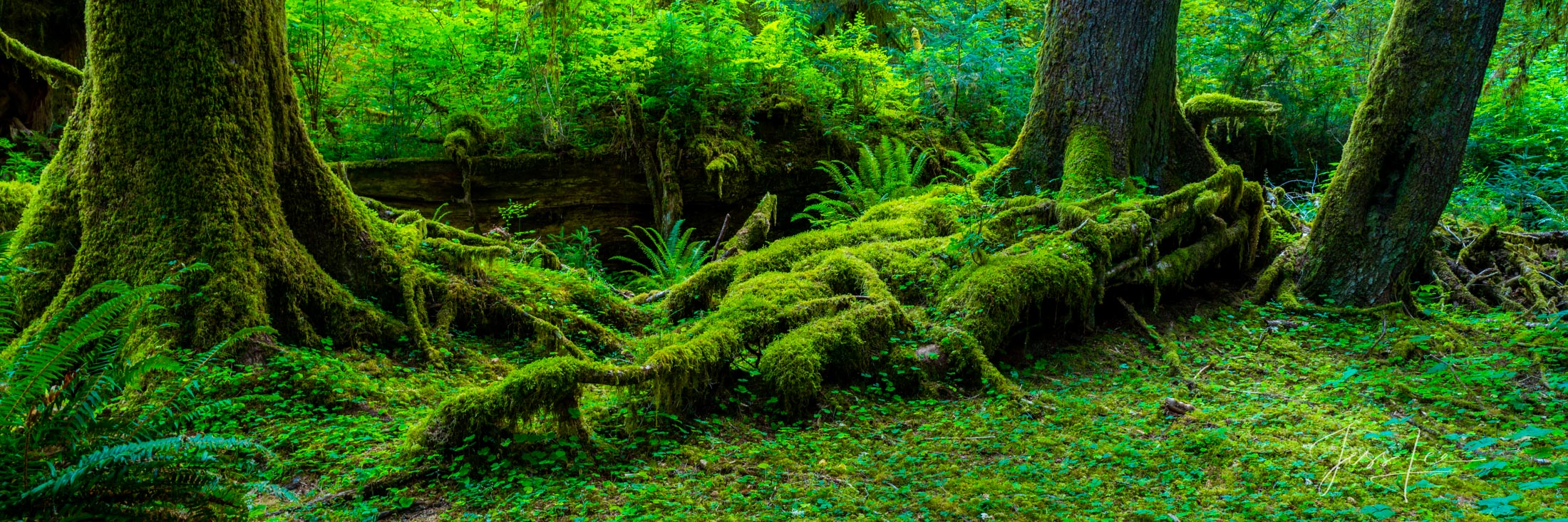 Bring the beauty of the Hoe Rainforest into your home with Jess Lee's limited edition fine art photography print Reaching Out...