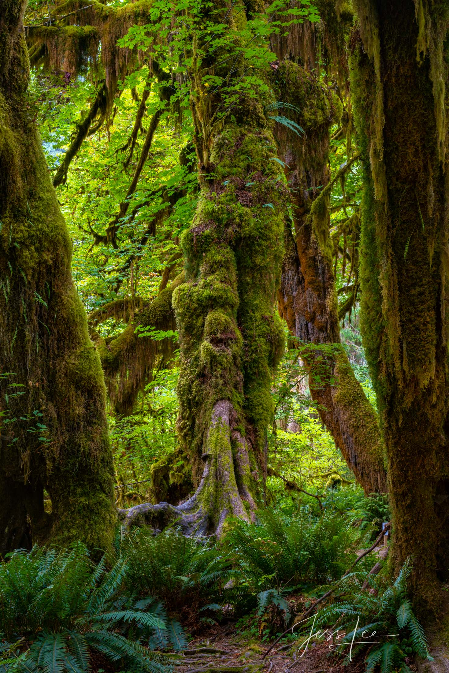 Bring the beauty of the Hoe Rainforest into your home with Jess Lee's limited edition fine art photography print Stand Out from...