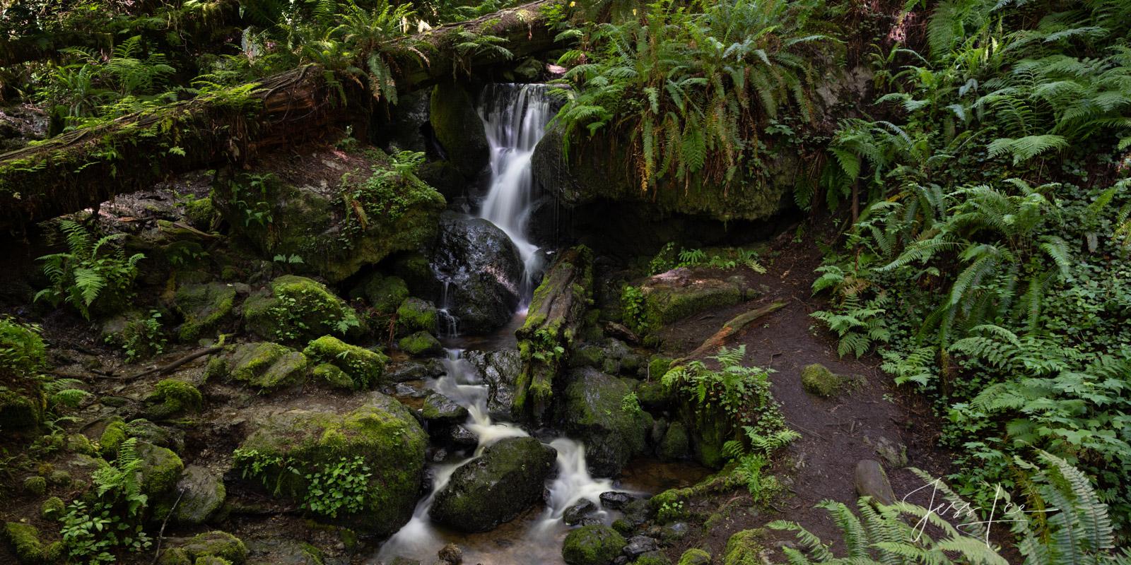 Trillium Falls and ferns