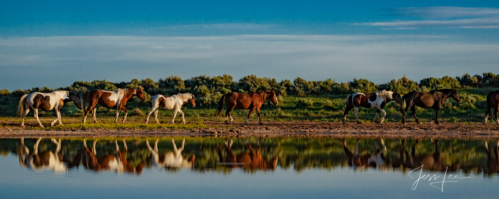 Fine Art Limited Edition Photography of Wild Herd of Mustang Horses. Wild Horses or Mustang herd at water hole. This is part...