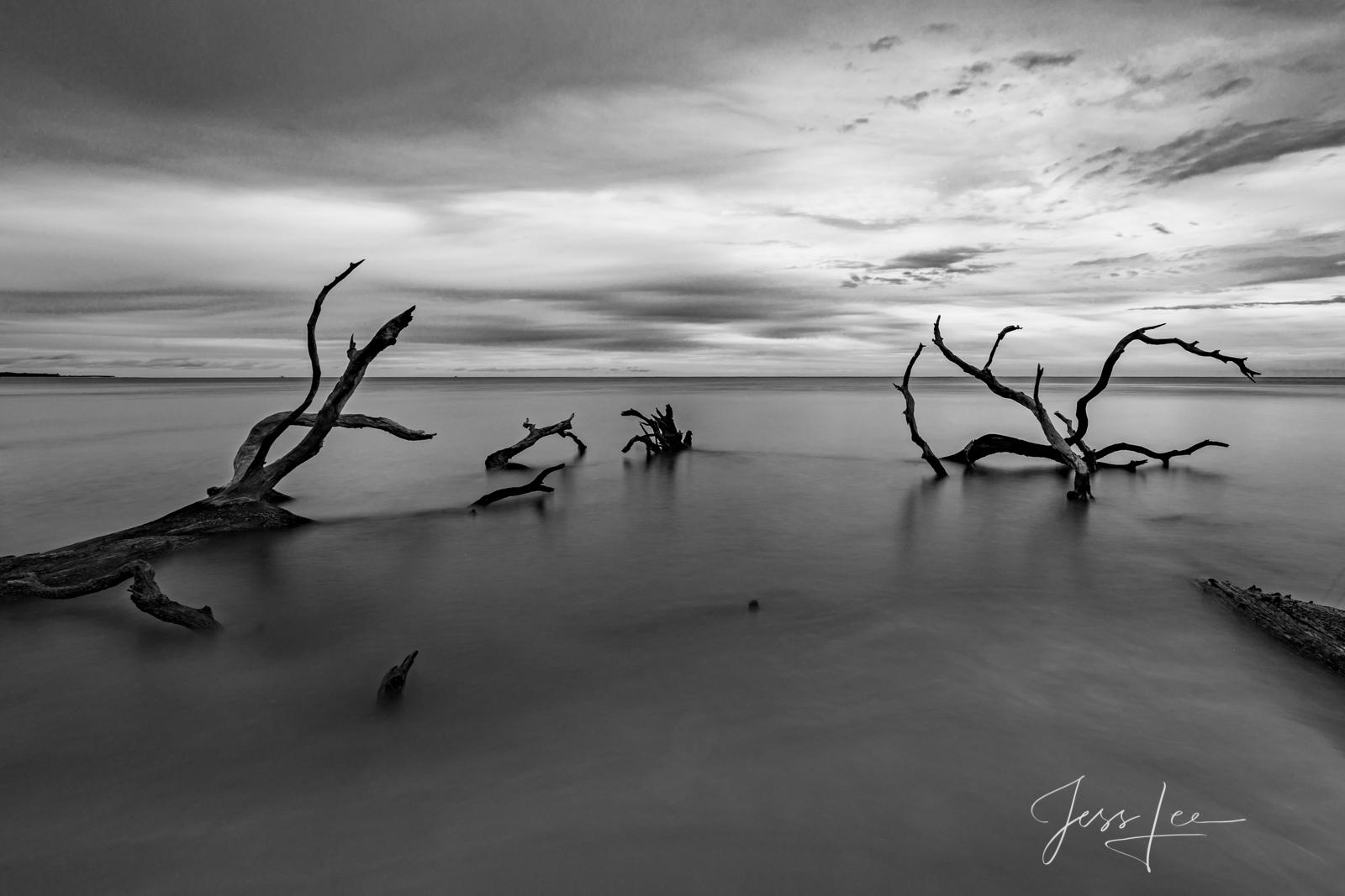 Ocean with dead trees