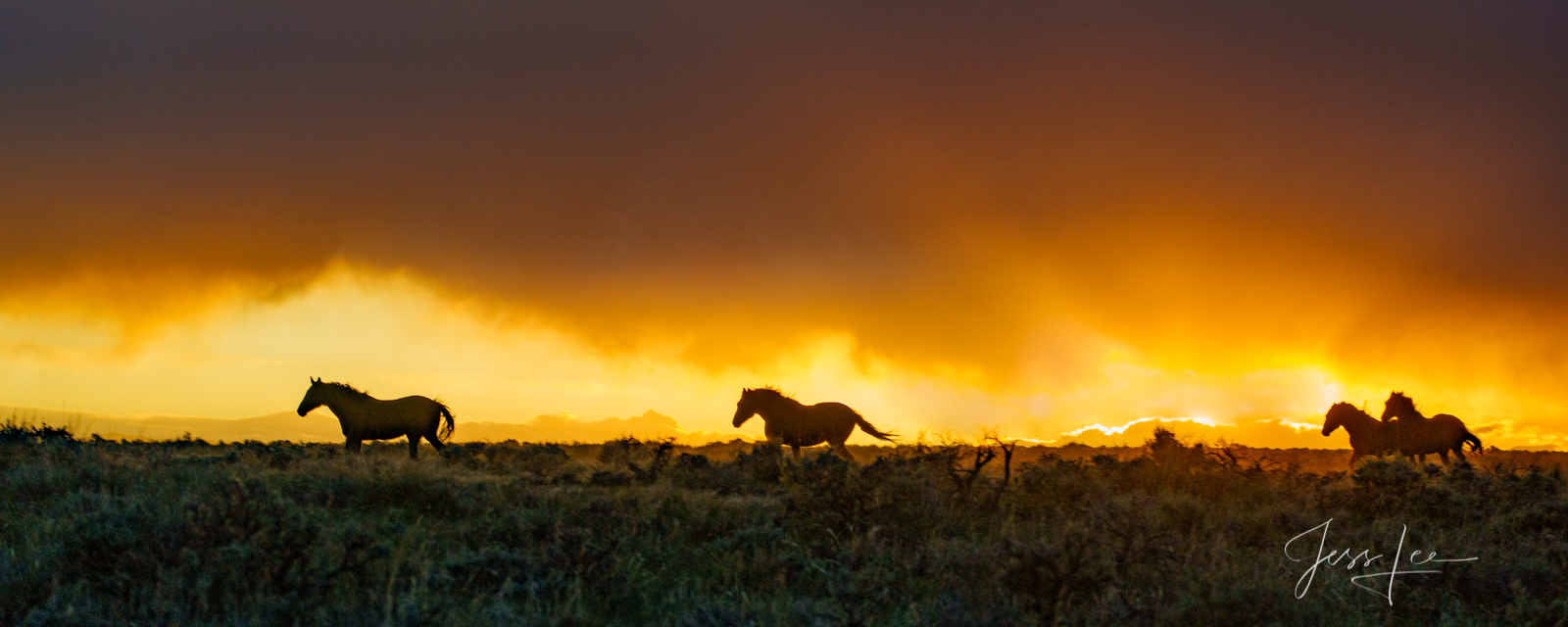 Fine Art Limited Edition Photography of Wild Herd of Mustang Horses. Wild Horses or Mustang herd running during a sunset storm...