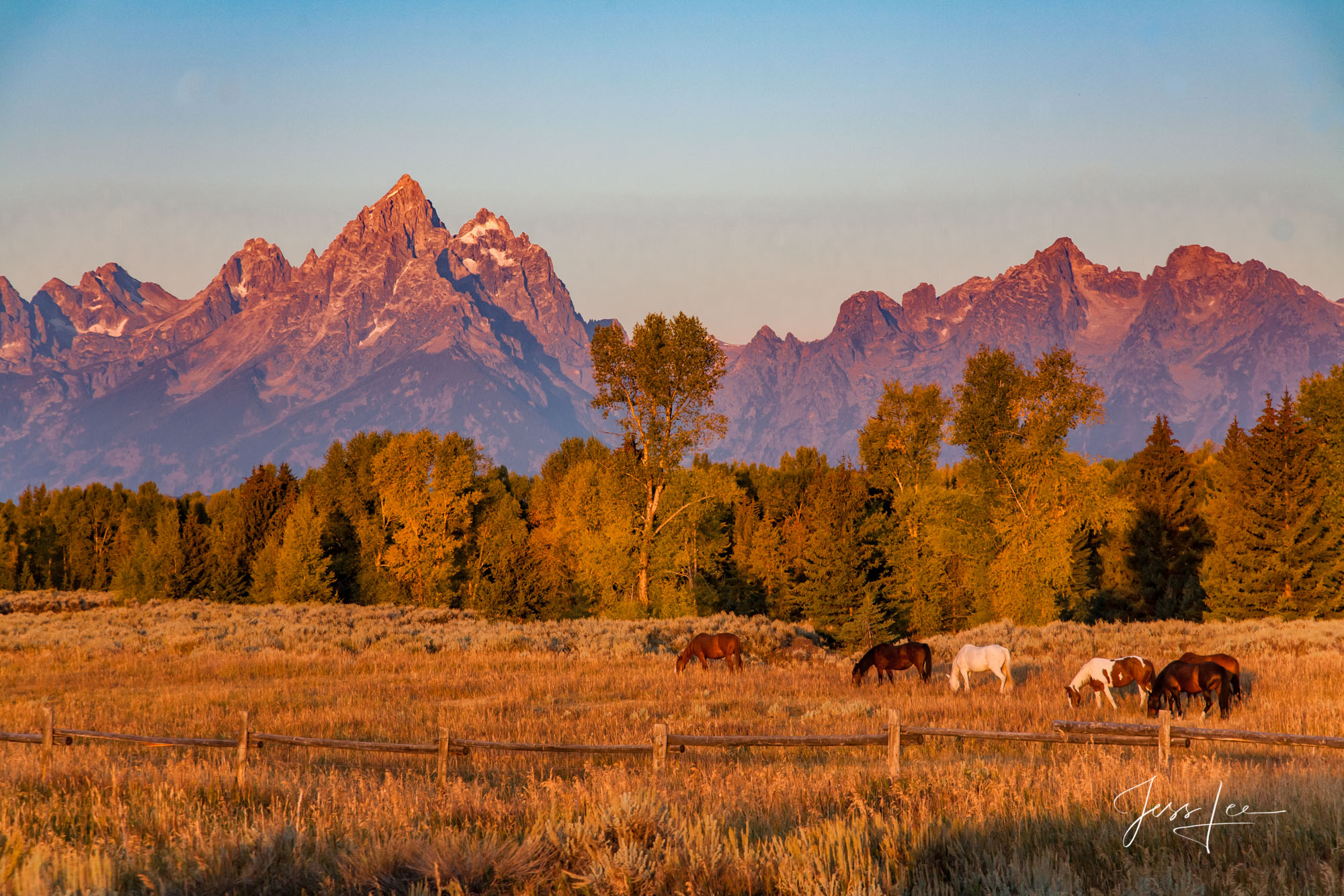 Fine Art Limited Edition Print of 250 Sunrise hitting the tops of the Teton Mountain Range as a herd of horses peacefully graze...