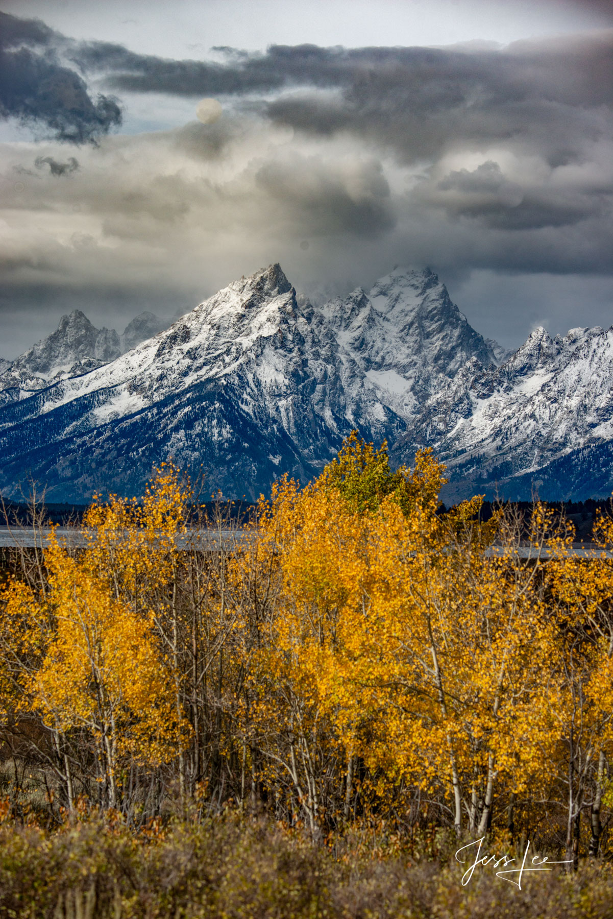 Aspens and Tetons, Large format,