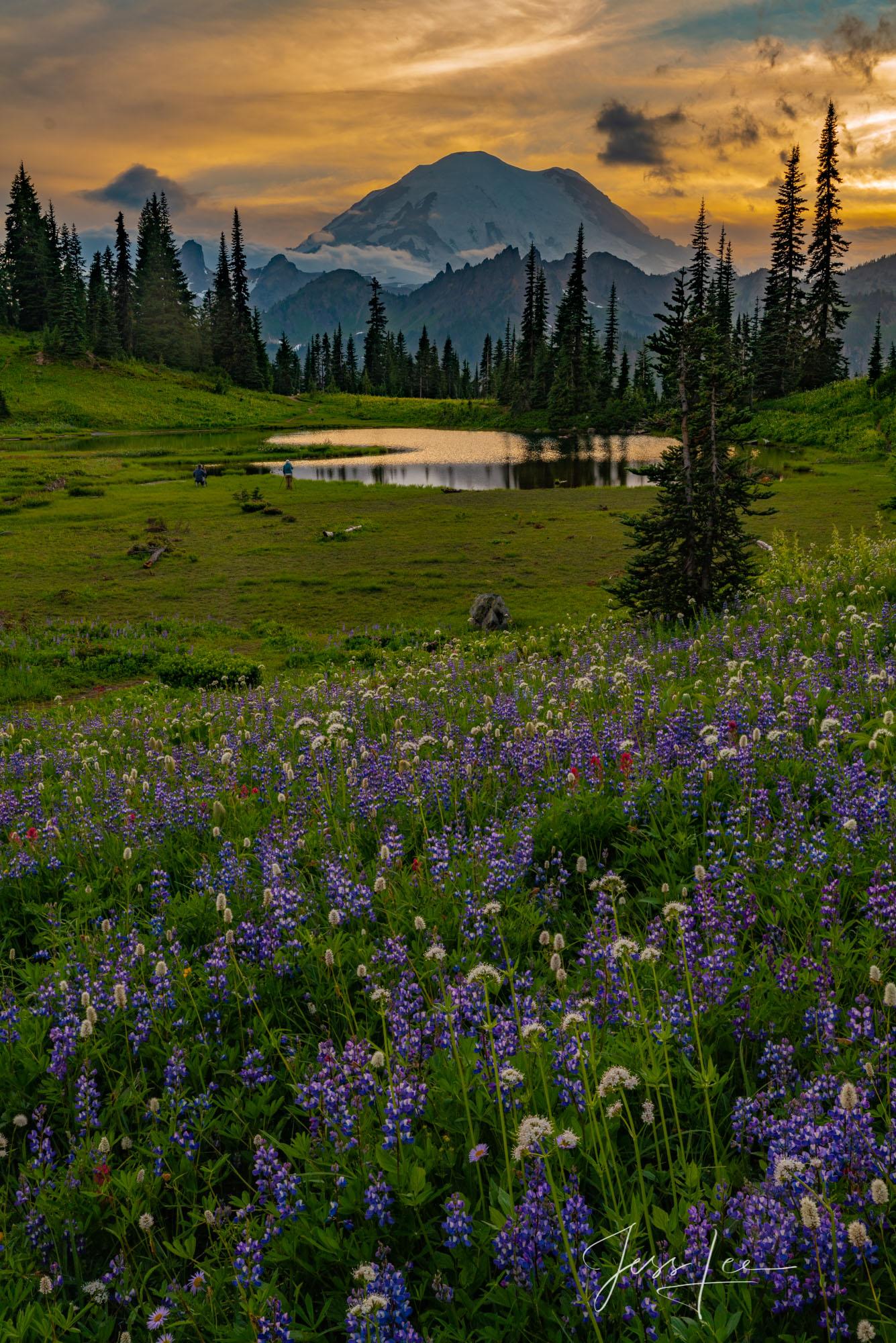 photo of Mount Rainier at sunset, Washington landscape photography, Pacific Northwest, PNW, lupine, flowers, sunset, sundown, summer, Tipsoo Lake, water, National Parks , photo