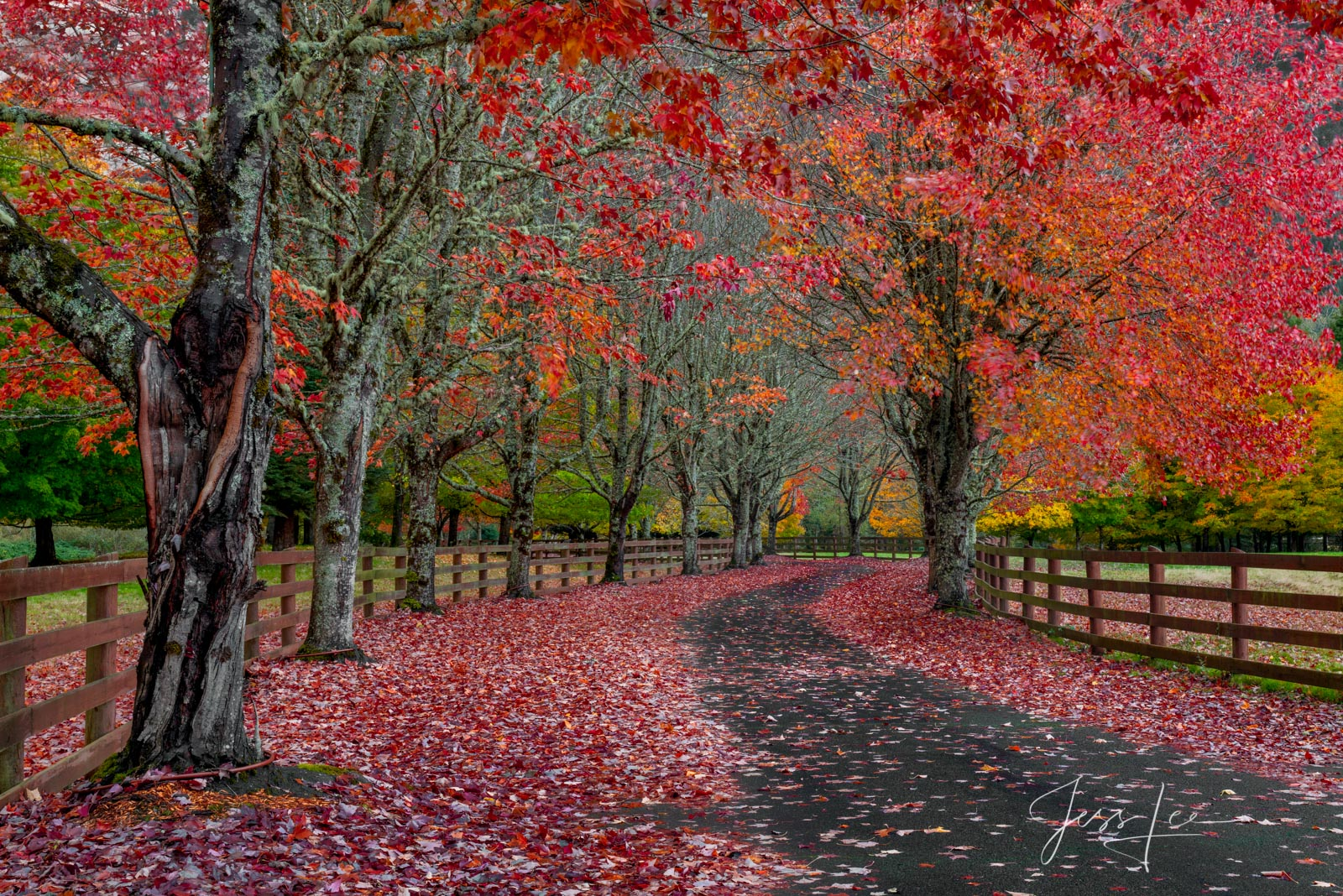 Let your mind drift and take you into this calming autumn path with this Limited Edition of 50 fine art prints of the Red Way...