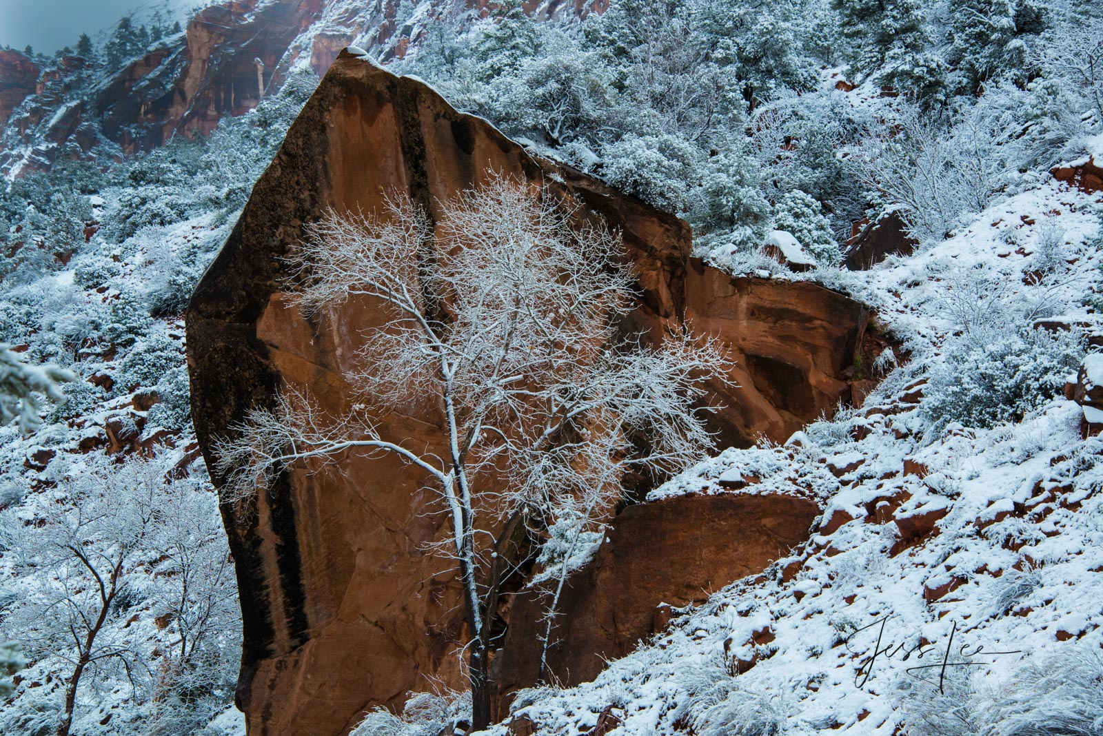 Zions Arrowhead Rock in Winter