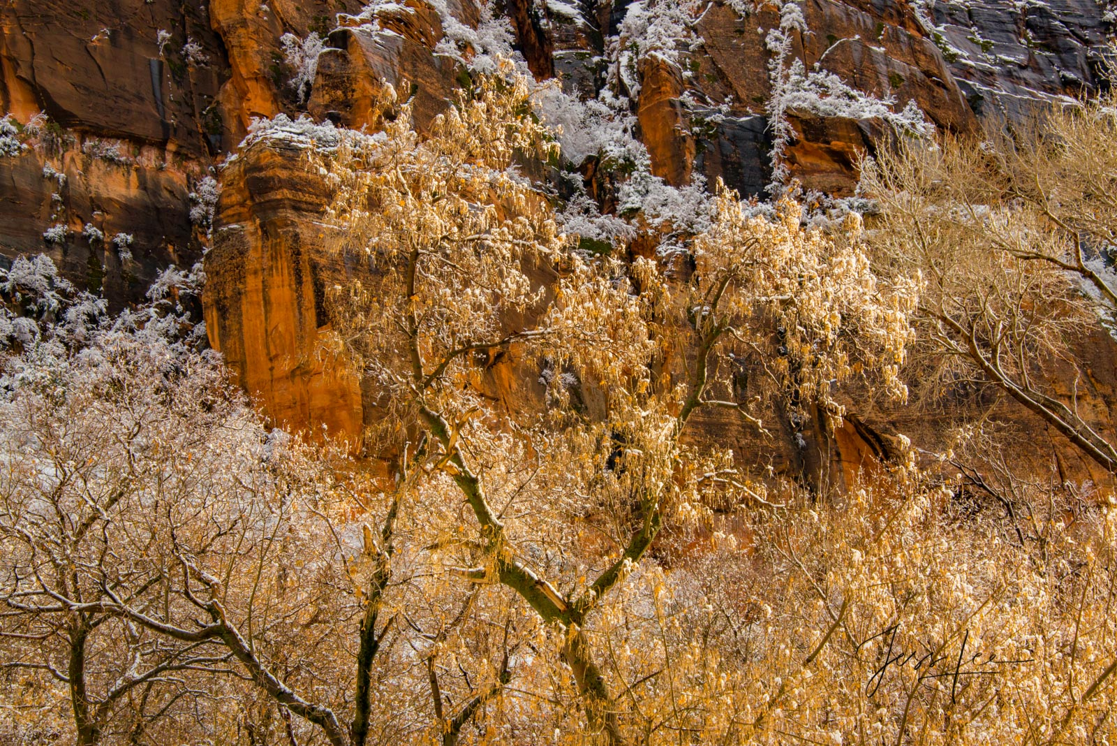 Autumn leaves with snow in Zion